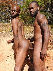 Tattooed black stud Phenix is back for scene with Black Rod - Gay porn pics at GayStick.com