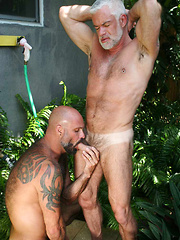 Silver Daddy Jake Marshall and Super Hairy Hunk Marco Rios - Gay porn pics at GayStick.com