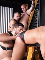 Dungeon Pigs Rutting